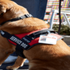 Emotional Support Animal Packages